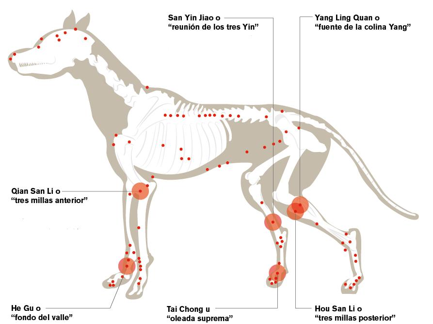 infografia-perros